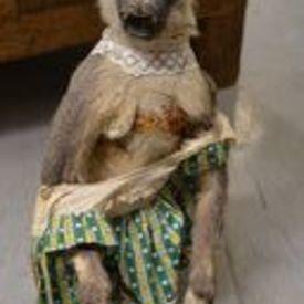 Monkey In Dress