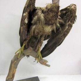 Bird 112cm High