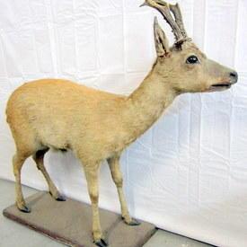 Deer 87cm High 99cm Long