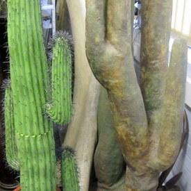 Green Cactus In A Pot 167cm High And Brown Plant 256cm High