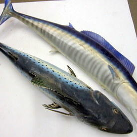 Fake Ocean Fish 140cm Long