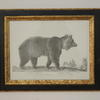 "20""X 16"" Black & Gilt  Frame B&W Print, Wild Animals  (Y)"
