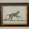 "20""X 16"" Black & Gilt  Frame B&W Print, Wild Animals"