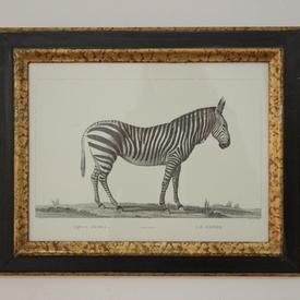 """20"""" x  16"""" Black & Gilt  Frame B&W Print, Wild Animals"""