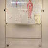 4' X 3' Nobo Revolving Wipeboard On Stand