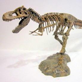 Dinosaur Skeleton M Odel 93cm Long 38cm High