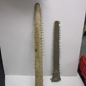 Bone 90cm Long And 139cm Long