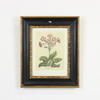 "13""X 11"" Black & Gilt Frame Wildlife Print Of Flowers"