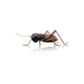 Two Tone Brown Beetle On Brass Legs