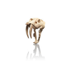 Tiger Skull Sculpture