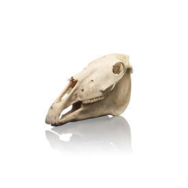 2 Piece Horses Skull Sculpture