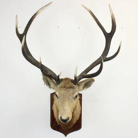Large Deer'S Head on Shield